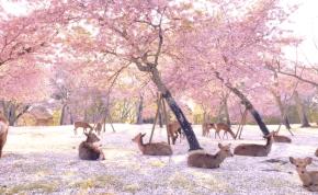 Videó: ha ezt megnézed, elönt a nyugalom, megszűnik minden gondod, és pozitív leszel
