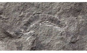 Máshogy fejlődhetett az élet a Földön, mint azt gondoltuk? 425 millió éves maradványra bukkantak