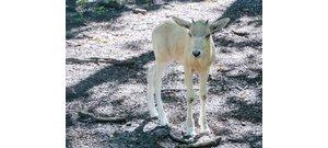 Vörös listán lévő állatfaj új egyede született a Szegedi Vadasparkban