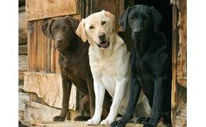 Tudod, valójában hány éves a kutyád? Meg fogsz lepődni