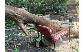 Majdnem gyermekei szeme láttára zúzta össze a lezuhanó fa az édesanyát – videó