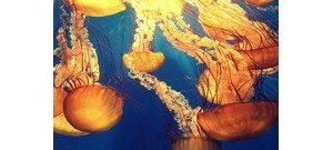 Kvíz: tudod, melyik állat halhatatlan, és hogy melyik tud járni a vízen?
