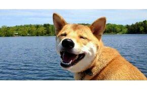 A kutyák tényleg tudnak mosolyogni?