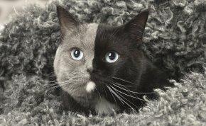 Kétarcú cicáknak születtek kölykeik: soha nem találnád ki, hogy néznek ki – fotó