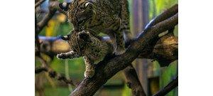 Igazi ritkaságot fotóztak le a Nyíregyházi Állatparkban