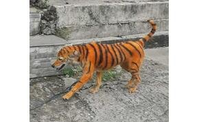 Különös színű állat sétált az utcán, aztán kiderült, hogy mi történt