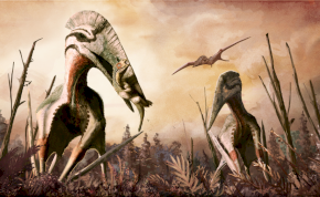 Egy egyetemi hallgató megvizsgált egy 100 éves ősmaradványt, és felfedezett egy új dinoszauruszfajt