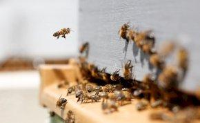 A méhek a kaki hasznosítás mesterei, a Földön nincs párja a zsenialitásuknak