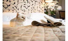 Így tengeti az életét a világ leggazdagabb macskája, Choupette