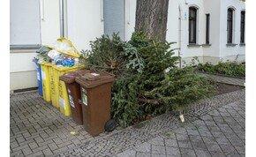 A karácsonyfáknak is van mennyországa, ha már kidobtuk őket?