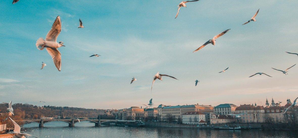 Okosító-kvíz: tudod, mit jelent, ha alacsonyan szállnak a madarak? Jól olvasod a természet jeleit? Játékra fel!
