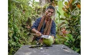 Indonéziában kókuszdióval és a levelekkel is fizethetik tandíjukat a diákok