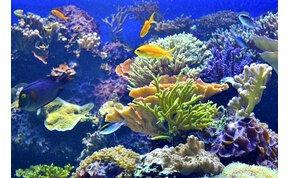 Kiderült, hány korall élhet a Csendes-óceánban, és döbbenetes szám jött ki