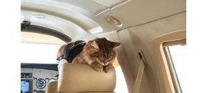 Egy kóbor macska majdnem tömegkatasztrófát okozott egy utasszállító repülőgépen