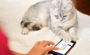 A macskanyávogást emberi nyelvre fordító applikációval rukkolt elő az Amazon egykori mérnöke