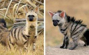 Biztosan nem tudtad, hogy létezik ez az igazán különleges állat