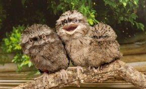Nevetni fogsz! Kiderült, melyik az Instagram legszexibb madara