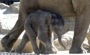 A Fővárosi Állatkert az emberek segítségét kéri