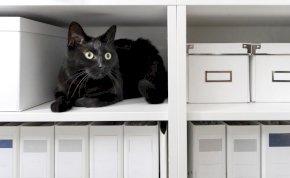 Kleptomániás macska miatt szégyenkezik a gazdija