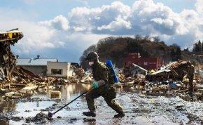 Fura állatok jelentek meg a fukusimai atomkatasztrófa környékén