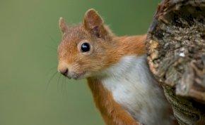 Emberségből jeles: elképesztő dolgot tett egy férfi, hogy megmentsen egy mókust – videó