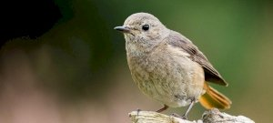 Kivégezték az összes madarat 2001-ben egy elmélet szerint - de akkor mégis, hogy repdesnek felletünk?