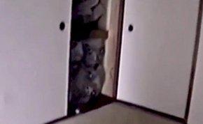 Horrorvideó sokkolja az internetet, félelmetes arcok látszódnak egy szekrényben - videó