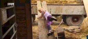 Házasodna a gazda: Új szintre emelték a ganajozást Gergő gazda kiszemeltjei