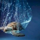 Evolúciós csapda: műanyaggal táplálkoznak a fiatal tengeri teknősök