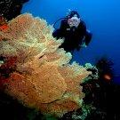 Mesebeli lényeket kapott lencsevégre egy mélytengeri kamera – nem fogsz hinni a szemednek!