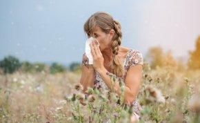 Egy bogár a parlagfű allergiások megmentője?
