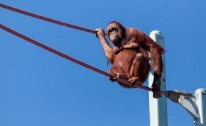 Horrorisztikus fordulatot vett egy plüssmackó utazása a dublini állatkertben – videó