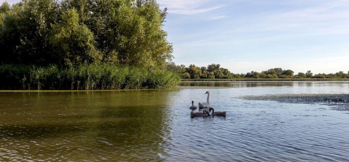 Nagyon fura, ősi lényeket találtak az egyik leghíresebb magyar tóban - fotó