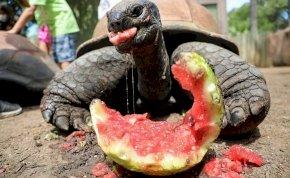 Megelevenedett a teknős és a nyúl meséje, ennek a verziónak azonban ijesztőbb a vége – videó