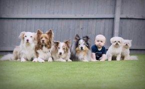 Jogsi kutyákhoz? Most te is szerezhetsz!