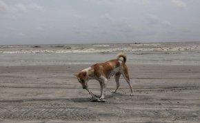 Majdnem szívrohamot kapott a nő, amikor kutyája bot helyett egy egészen elképesztő dologgal futott oda hozzá