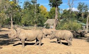 Óriási örömhírt közölt a Nyíregyházi Állatpark