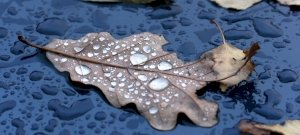 Heti időjárás: érkezik a szél, az eső, valamint a fagy