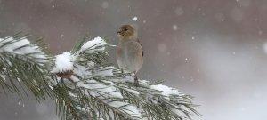 Időjárás: a Kékestetőn már havazott, de vajon csütörtökön is ilyen idő vár ránk?