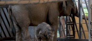 200 forintos jegyár a Fővárosi Állatkertben? Hatalmas kedvezmények az őszi szünet alatt
