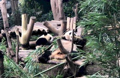 """""""Vonattal érkeztem a világ panda fővárosába!"""""""