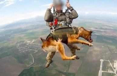 Hihetetlen: Putyin ejtőernyős harci kutyákat akar bevetni? – fotók