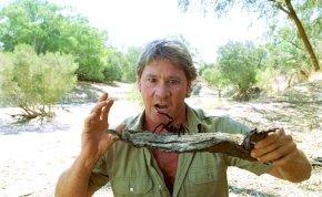 Ma 15 éve hunyt el Steve Irwin – Íme pár különleges pillanat a krokodilvadász életéből!
