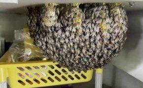 Méhek lepték el egy étterem konyháját, és nem is akarják kirakni őket - fotók