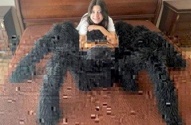 Hagynád, hogy egy óriási pók őrizze az álmod? Ha igen, akkor van egy remek hírünk! – galéria