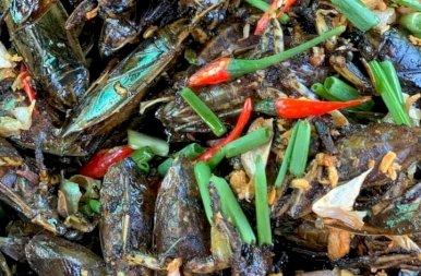 Utazása a tarantulák világába, ahol az éhséget csillapítják a rovarral