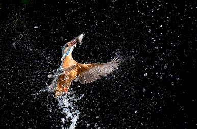 Ezek a jégmadaras fotók rohamosan terjednek az interneten